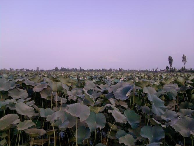روستای روشن آباد